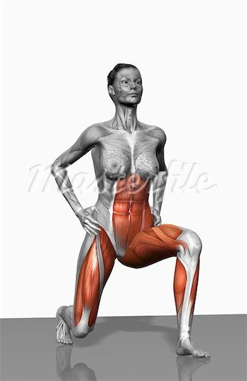 Look at the muscles used when lunging!