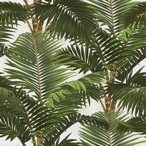 Mind The Gap Jardin Tropical Wallpaper - Trouva
