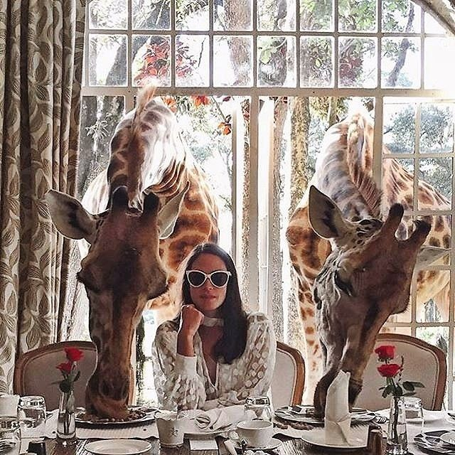 Foodie Adventures: The Ultimate Culinary Bucket List - You can dine with the giraffes at Giraffe Manor in Nairobi, Kenya.