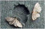 НАТУРАЛЬНЫЕ СРЕДСТВА ОТ МОЛИ http://pyhtaru.blogspot.com/2017/05/blog-post_7.html  Натуральные средства от моли.  Многие из нас сталкивались или сталкиваются с таким насекомым, как моль.  Читайте еще: ==================================== НАПИТОК ТРАВНИКОВ ИЗ КИТАЯ http://pyhtaru.blogspot.ru/2017/05/blog-post_96.html ====================================  Это мелкая невзрачная бабочка, пожирающая наши вещи из шерсти или кожи, хотя есть и зерновая моль, которая предпочитает кушать различные…
