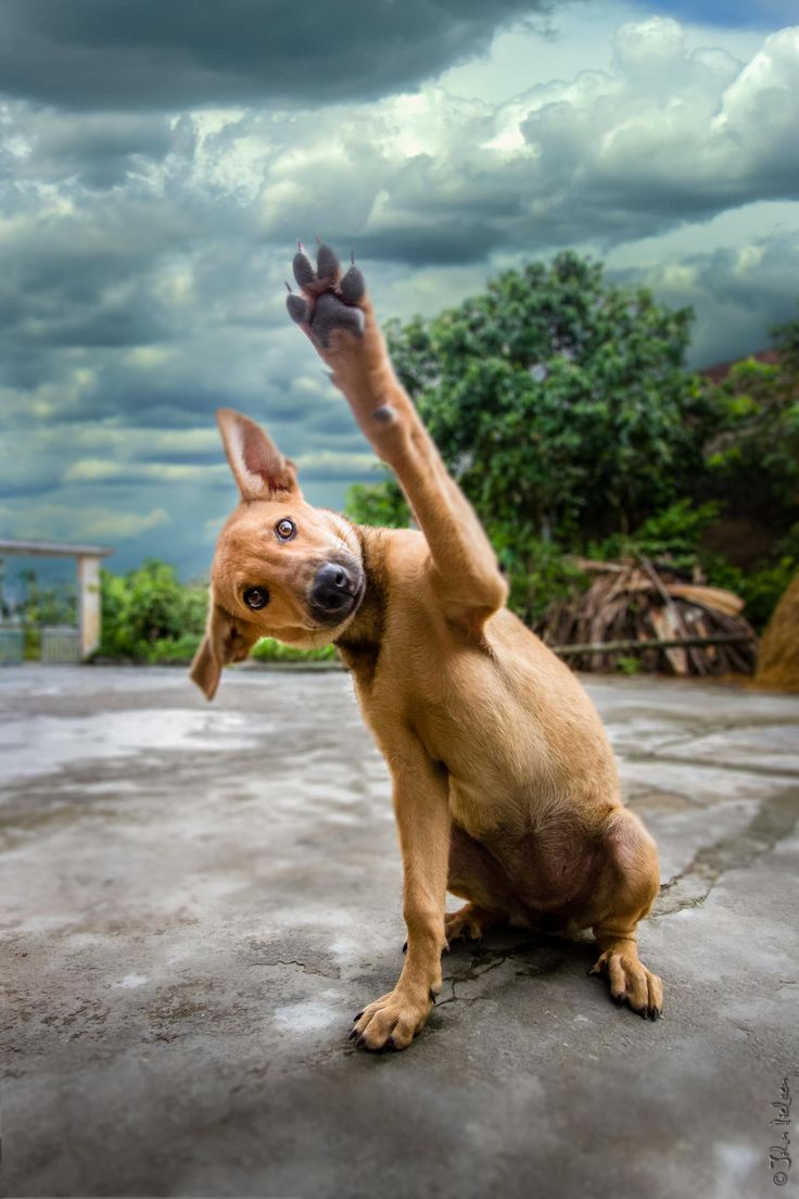 Image result for it's friday dog high fiving