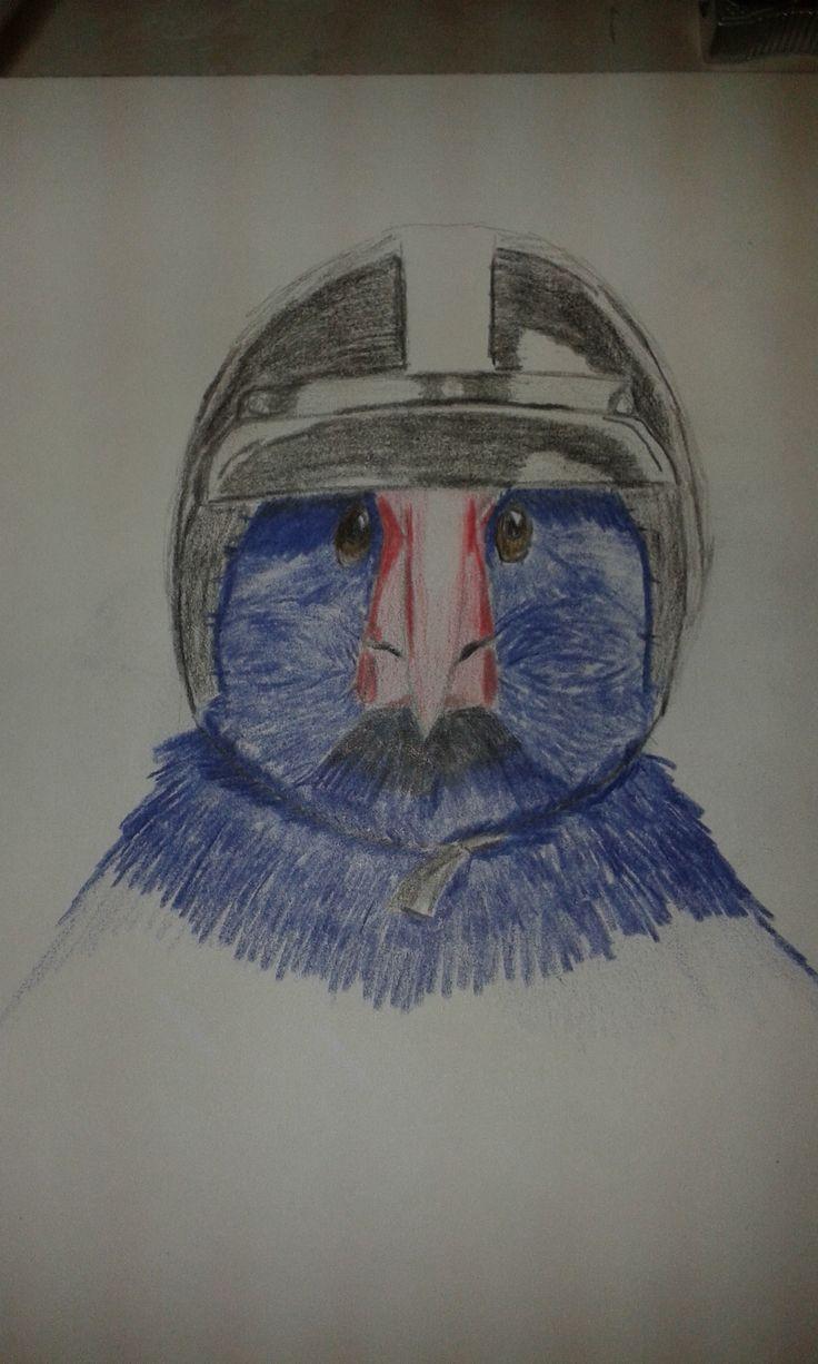 Takahe wearing a helmet - coloured pencil