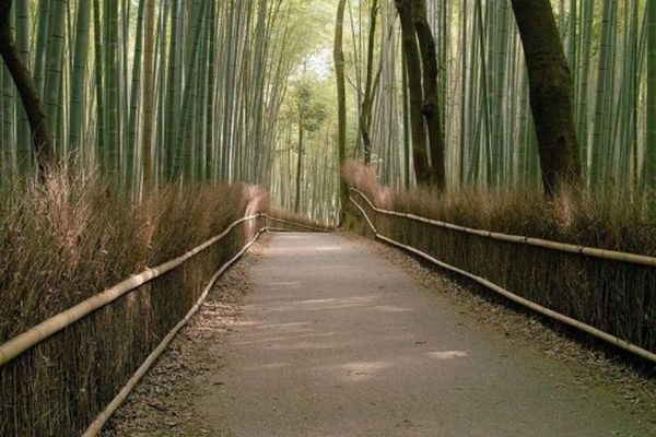 Στη βορειοδυτική πλευρά της πόλης Κιότο στην Ιαπωνία και καλύπτει έκταση 16 τετραγωνικών χιλιομέτρων.     Το δάσος Σαγκάνο είναι διάσημο τόσο για τη φυσική καταπράσινη ομορφιά του, όσο και για τις μελωδίες που… παράγει!
