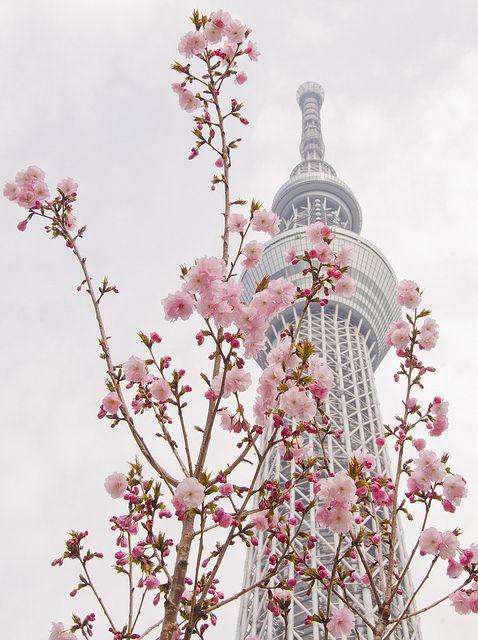 Tokyo Skytree in #blossom #SPRING COLLABORATION, via Flickr.