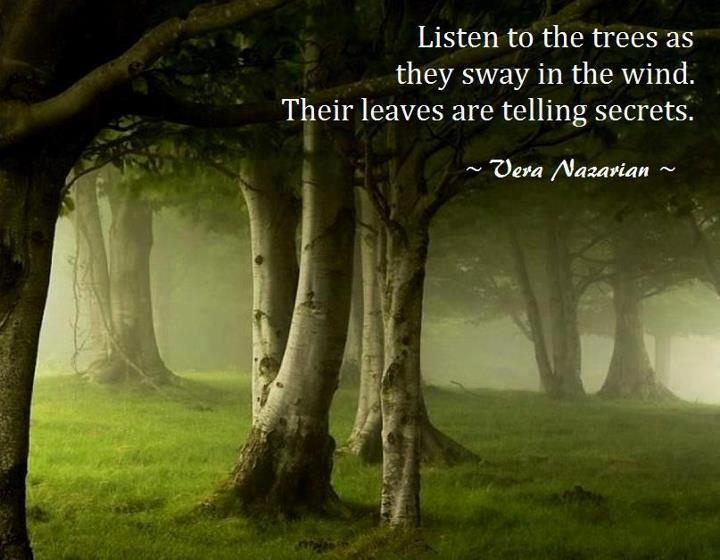 """Listen to the trees as they sway in the wind. Their leaves are telling secrets. Their bark sings songs of olden days as it grows around the trunks. And their roots give names to all things. Their language has been lost.  But not the gestures."" ~Vera Nazarian"