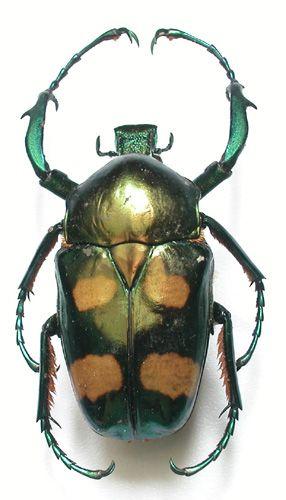LE CABINET DE CURIOSITES - [Deyrolle - Taxidermie, entomologie, curiosités naturelles]