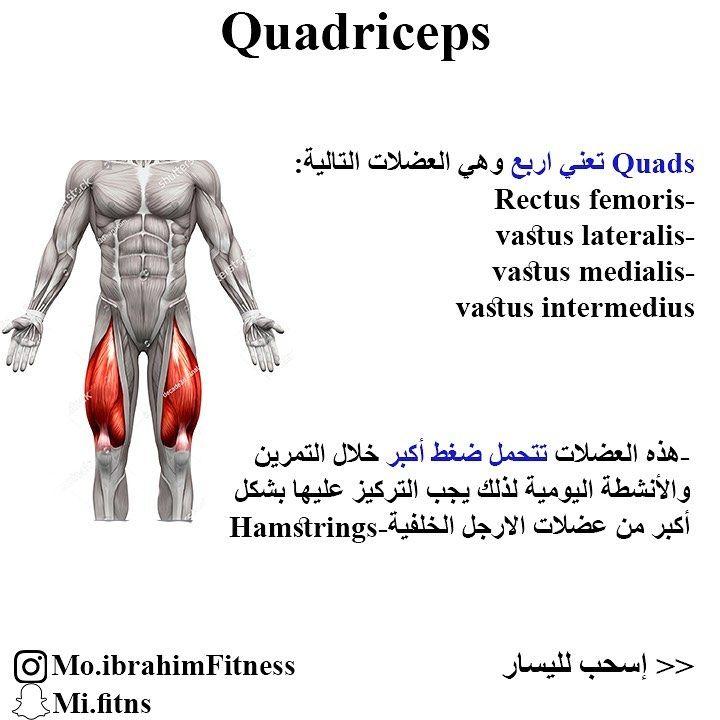 من اكثر الاخطاء الشائعة اهمال تمرين الارجل تمثل العضلات في الجزء السفلي من الجسم عضلات الارجل والمؤخرة في الرجال 54 9 وفي النساء Muscle Memes Movie Posters