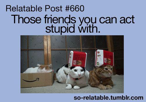 funnyfriend posts | gif cat LOL funny gifs cute friends true Friendship friend stupid i ...