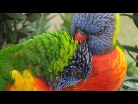 Welcome to Birds in Backyards | BIRDS in BACKYARDS