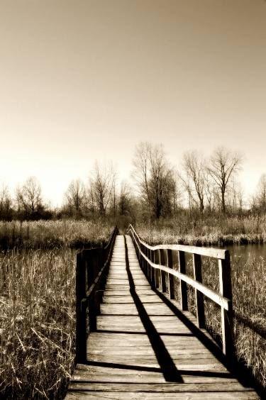"Saatchi Art Artist Casey Patterson; Photography, ""The Path"" #art"