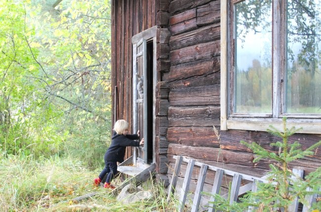 : Autumn, Fall, Autumn, Blog, Eco