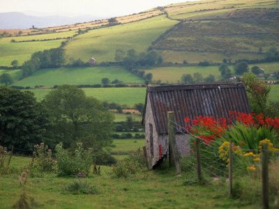 This is such a typical picture of the countryside of Ireland. Soooo green.