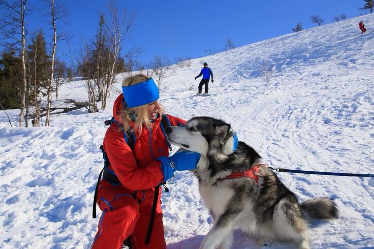Meeting a cute Alaskan Malamute dog when skiing in Ylläs Äkäslompolo Lapland Finland.  www.theberrystay.com
