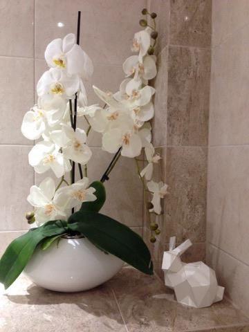 Orchids Decorate