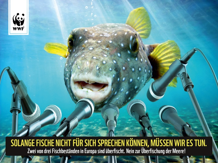 Schuld an der Überfischung unserer Meere haben die Minister der EU-Staaten!   Wir müssen die legale Überfischung jetzt beenden!     Unterzeichnet die Petition an die verantwortliche Politikerin: www.schwarm.wwf.de und REPINT diesen Beitrag!