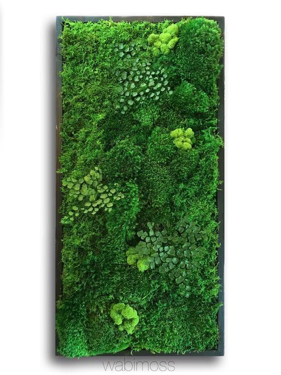 18x36 Quot Real Preserved Moss Wall Art No Sticks No Care Green Wall Art Real Preserved Moss And