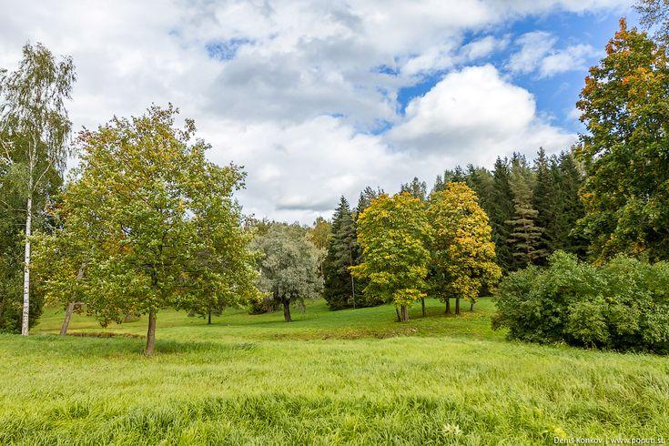 павловский дворец, павловск, павловский парк, заповедник, лес, осенний лес