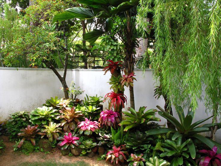 [IMG_9891.JPG]. Florida GardeningWalled GardenTropical GardensSouth ...