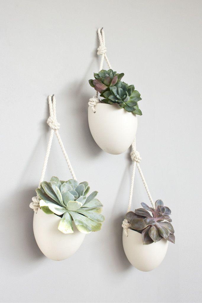 Plantes suspendues par de jolies cordes