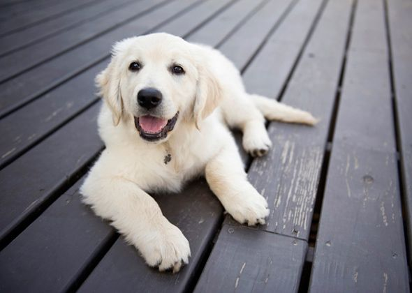 We talked to 122 veterinary professionals and got their take on which are the smartest dog breeds. Do you agree with them? Did your favorite breed make the list?