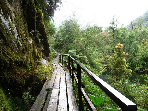 Sendero, Parque Nacional Alerce Andino