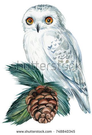 Christmas decoration elements, cone, spruce branches, white owl, watercolor, hand drawing