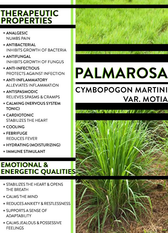 Distilled since the 18th century, Palmarosa essential oil centers the heart and mind. Learn more about essential oils and get exclusive essential oil recipes from Soul Expert Gina at YoffieLife.Com.