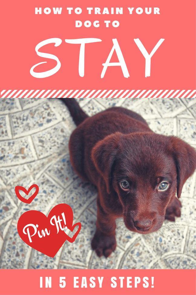 261 best GREAT Dog Training Tips \ Cat Training Too images on - dog trainer resume