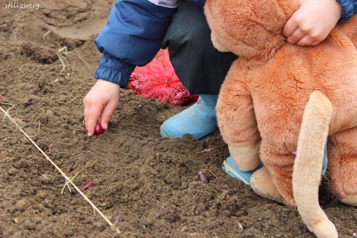Der Stillzwerg :Zwiebeln stecken mit 20 Monaten / Montessori / Maria Montessori / Übung des täglichen Lebens / Übung zur Pflege der Umgebung  http://stillzwerg.blogspot.de/2015/04/zwiebeln-stecken-mit-20-monaten.html