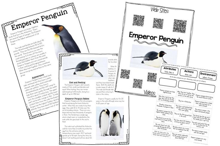 The 25+ best Information about penguins ideas on Pinterest
