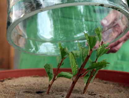 Размножение спиреи осенью и весной | Дача - впрок
