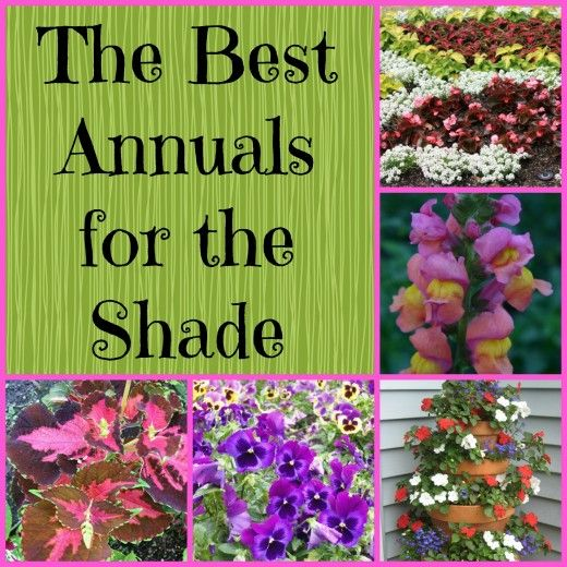 Shade annuals:  alyssum, begonias, browalia, coleus, 4 o'clocks, impatiens, lobelia, pansies, snapdragons.