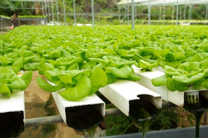 Hydroponics Basics - References and Resources