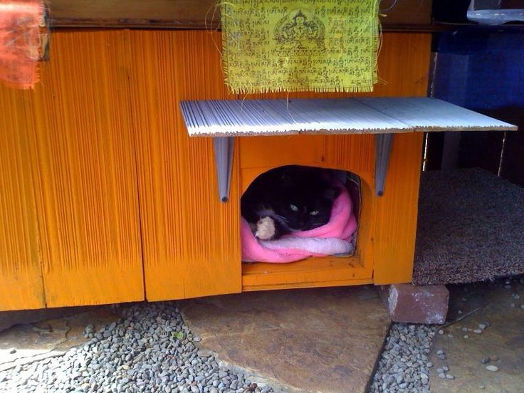 Outdoor Shelters For Animals : Best images about diy cat enclosures on pinterest