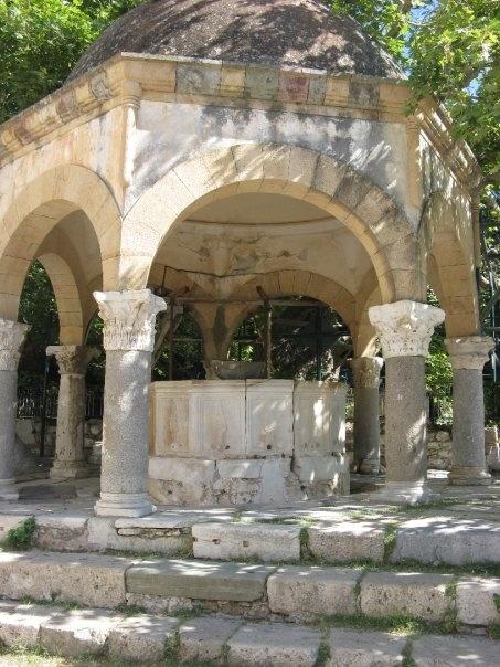 Hippocrates tree Kos
