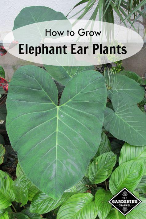 Best Shade Garden Plants