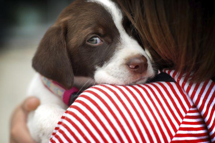 10 vantagens de ter um animal de estimação