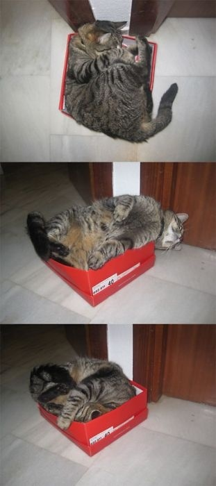 I will fit.
