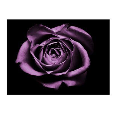 Graham & Brown Purple Drama Rose Wall Art- at Debenhams.com
