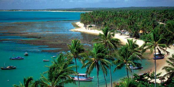fotos de praia do forte brasil - Pesquisa Google