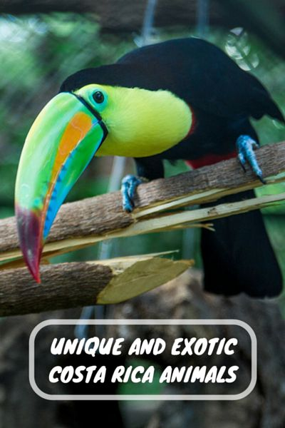Costa Rica is one of the most biodiverse countries in the world. Travel to Costa Rica with our help. Call to plan your next trip +1-844-9-UNPLUG or visit us at centralamericavacation.com