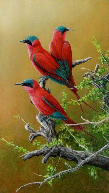 Carmine Bee Eaters by Wildlife Artist Jeremy Paul