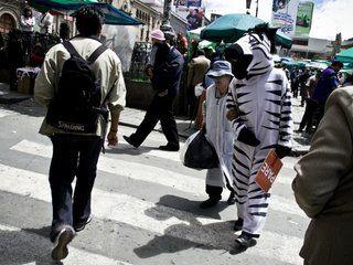 «Ζωντανές» ζέβρες εκπαιδεύουν τους οδηγούς στη Λα Παζ της Βολιβίας, ώστε να προσέχουν τους πεζούς. Πρόκειται για εθελοντές, ντυμένους ζέβρες, οι οποίοι στέκονται σε κεντρικές διαβάσεις πεζών και παραδίδουν πρωτότυπα μαθήματα κυκλοφοριακής αγωγής.