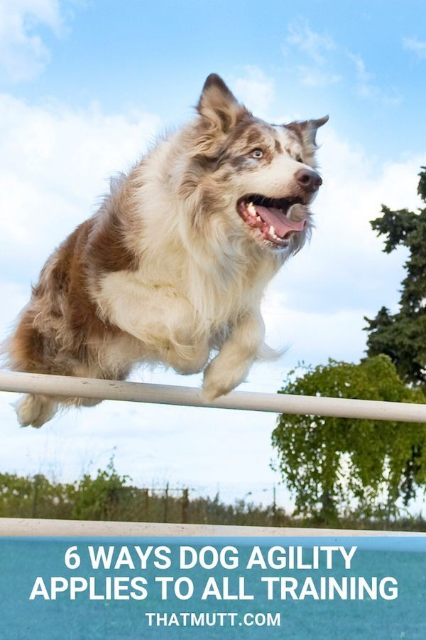 Dog Agility Training 6 Ways Dog Agility Applies To All Dog