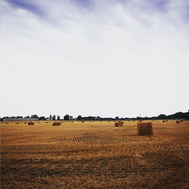 The fields of Prince Edward County, Ontario