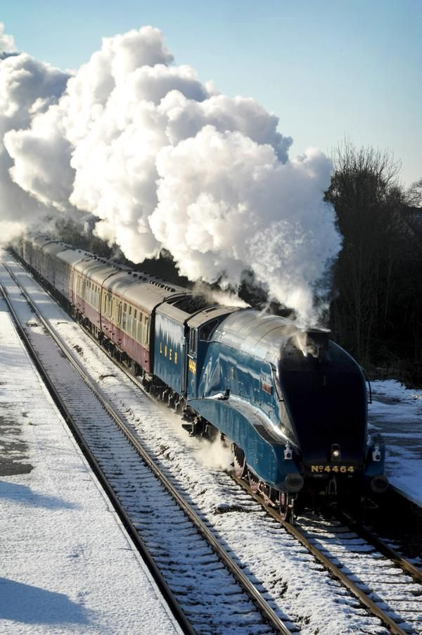 Great pic! MT@SpaldingVoice   Brilliant image of Bittern passing through Spalding by Nikki Clucas.