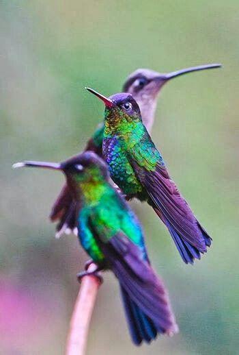 Hummingbirds - gorgeous!