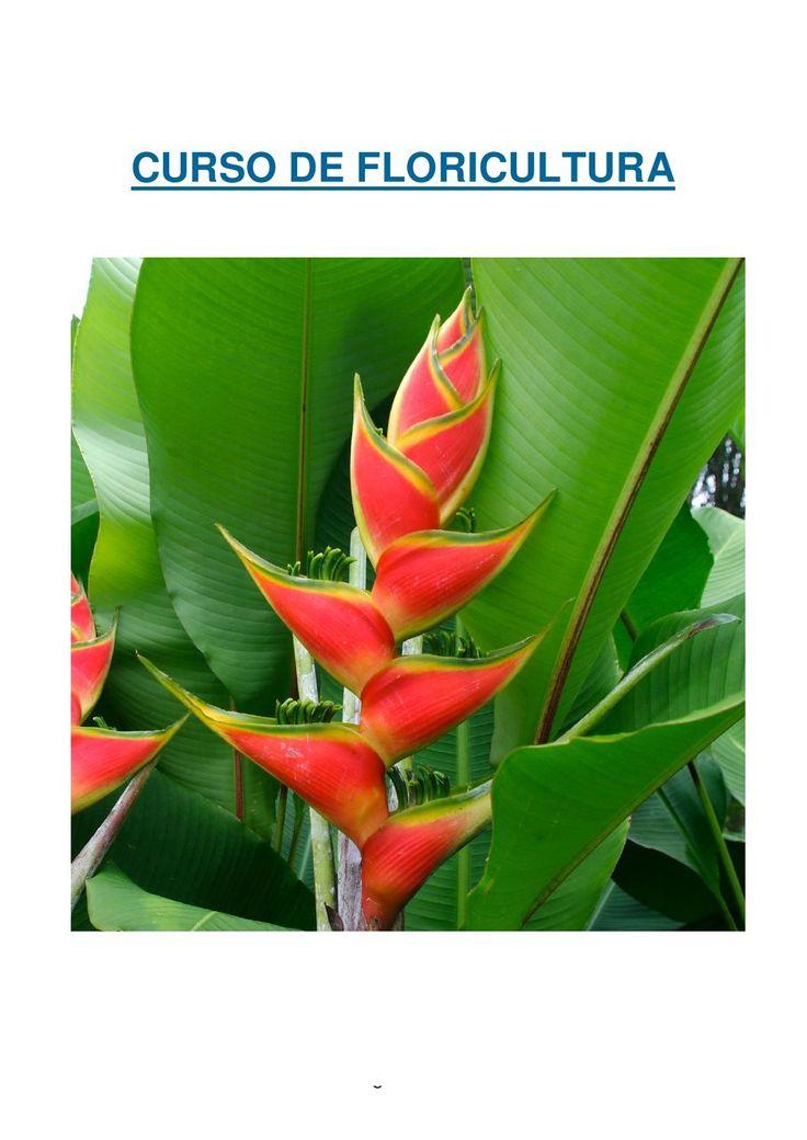 Curso de floricultura heliconias gingers musas orquideas