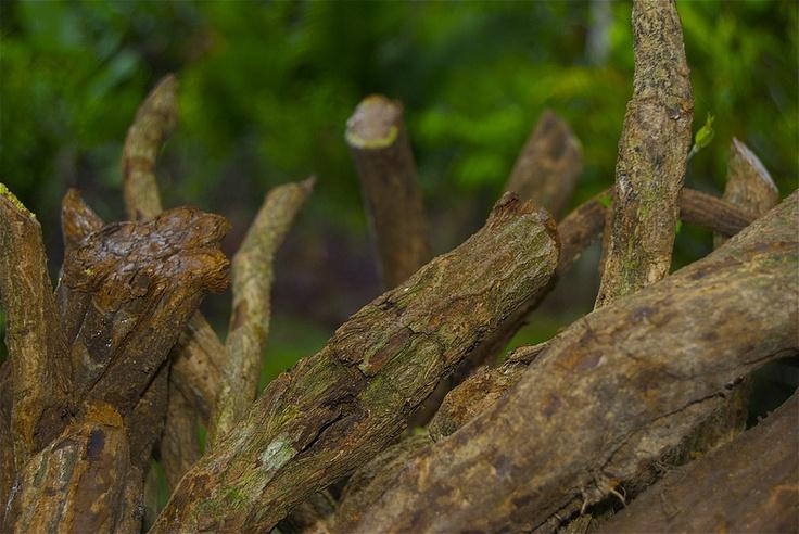 sacred vine of spirits ayahuasca pdf