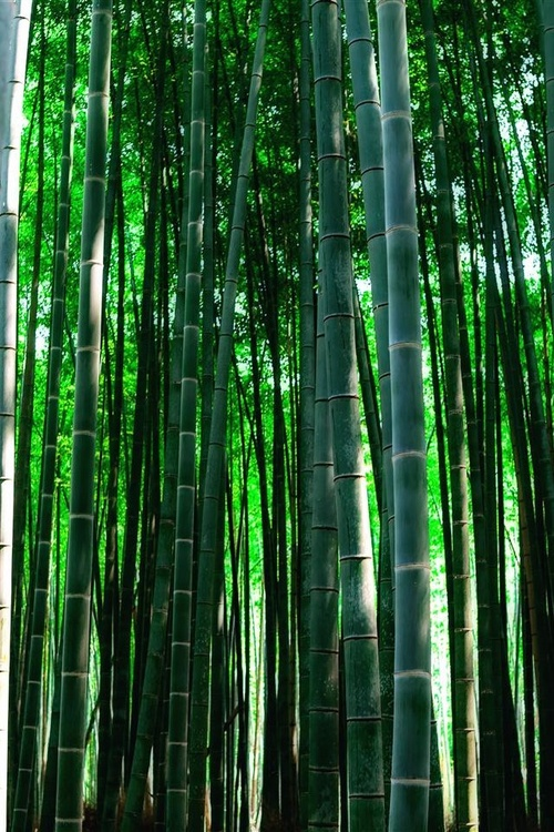 Best images about bamboo ideas on pinterest different
